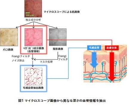 花王、血管画像自動抽出技術を用いて皮膚深部の血管と毛細血管の血流情報を同時に検出