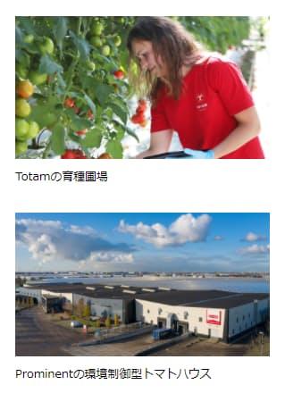 三井物産、オランダのトマト種子企業Totamへの出資参画について発表