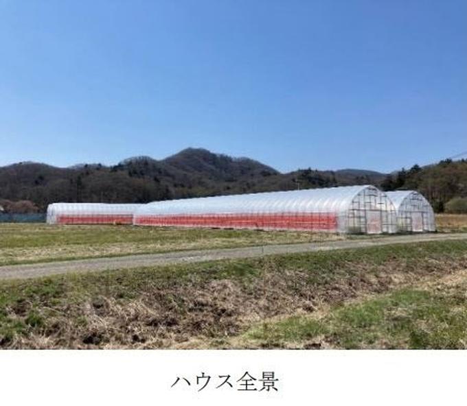 奥村組、「夏秋いちご」栽培・出荷・販売事業