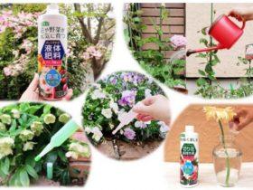 紀陽除虫菊、花・野菜・観葉植物向けの「液体肥料」「活力剤」「切り花長持ち液」